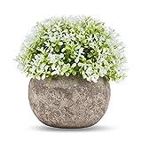 Künstliche Pflanzen Miniplastik Dekorative Kunstpflanze mit Grauen Töpfen für Ihr Büro und Ihrem Wohnbereich zur Zimmerdekoration