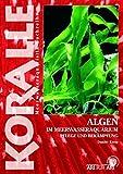 Algen im Meerwasseraquarium: Pflege und Bekämpfung (Koralle)