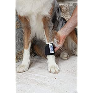 Dog Weight Cuffs 17