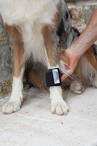 Dog Weight Cuffs 1