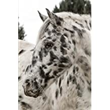 Appaloosa Horse Portrait Equestrian Journal: 150 Page Lined Notebook/Diary