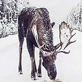 XWArtpic Alces en Nieve Ciervos Imprimir Invierno Nevado Cartel Arte Lienzo Pintura Imagen Decoración rústica de Navidad para Sala de Estar Decoración de la Pared del hogar 50 * 70cm