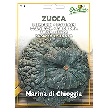 Semi di Zucca Marina di Chioggia in Busta termosaldata