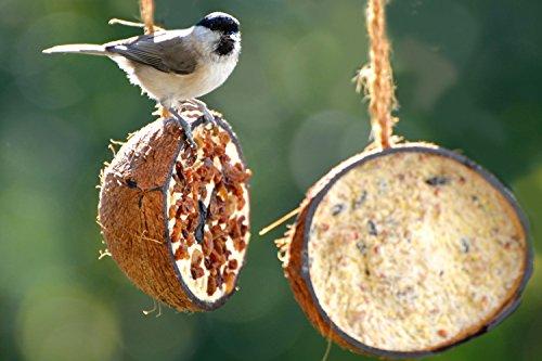 dobar Zehn gefüllte Kokosnüsse in 5 Vogelfutter-Sorten zum Aufhängen - 10