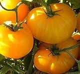 PLAT FIRM KEIM SEEDS: 25 - Seeds: Azoychka Tomatensamen - Seltene Tomatensamen. Russische Tomatensamen. !!!!