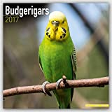 Budgerigars - Wellensittiche 2017: Original Avonside-Kalender [Mehrsprachig] [Kalender] (Wall-Kalender)