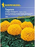 Tagetes erecta Antigua Orange