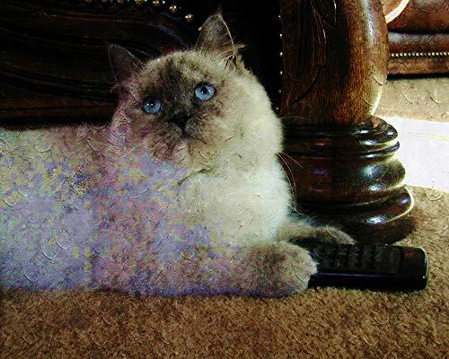 DIY Diamond Painting Full Bilder Ragdoll Lila Schildpatt Katze Tiere Runder Bohrer Handwerk Hobbies Helfen Sie, Stress Abzubauen Und Sich Zu Entspannen Rahmenlos 40X50Cm