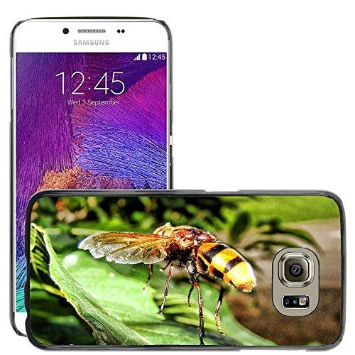 Carcasa Funda Prima Delgada SLIM Casa Case Bandera Cover Shell para // M00130125 Vespa Insect Yellow Jacket Sting // Samsung Galaxy S6 (Not Fits S6 EDGE)