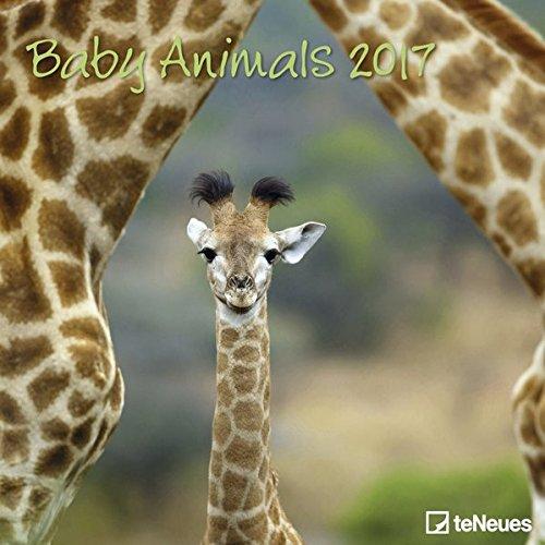 2017 Baby Animals Calendar - teNeues Grid Calendar - Animal Calendar - 30 x 30 cm