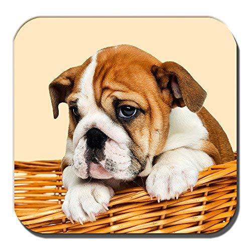 Cushions Corner Englisch Bulldogge Welpe Untersetzer Hellbraun Weiß Welpe Korb Creme Acryl -