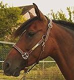 TDET Halfter Leder mit Platte TABAC Pferd