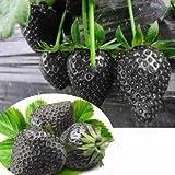 Soteer 100 Stück Riesen Erdbeere Samen großfruchtig zuckersüss Zierpflanzen für Garten und Balkon Topf usw.