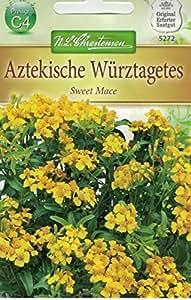 Chrestensen Aztekische Würztagetes 'Sweet Mace'
