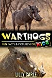 Warthogs: Fun Fact & Pictures For Kids