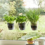 'Trio de plantes aromatiques