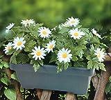Balkonkasten mit künstlichen Margeriten Blumenkasten Kunstpflanze Gartendeko