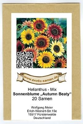 Sonnenblume - Autumn Beauty - Samenmischung - 20 Samen von exotic-samen bei Du und dein Garten