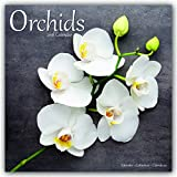Orchids - Orchideen 2018: Original Avonside-Kalender [Mehrsprachig] [Kalender] (Wall-Kalender)