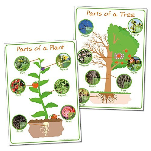 wildgoose Bildung Sc1110Teile der Pflanze und Baum Poster Set - Poster Set Teile
