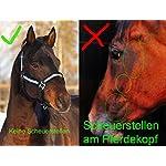 Meister Comfort Headcollar for Nobility, Travel, Stable Horse Headcollar Halter 14