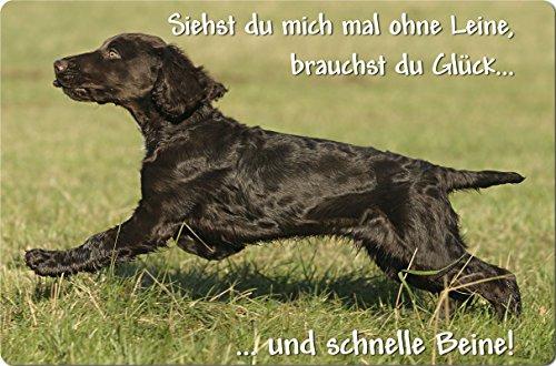 +++ Deutscher WACHTELHUND - Metall WARNSCHILD Schild Hundeschild Sign - DWH 01 T12