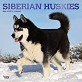 Siberian Huskies - Sibirische Huskies 2020 - 16-Monatskalender mit freier DogDays-App: Original BrownTrout-Kalender [Mehrsprachig] [Kalender] (Wall-Kalender)