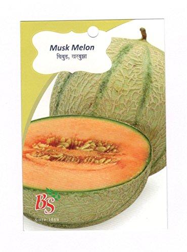 Bombay Seeds Musk Melon KGP [Seeds]