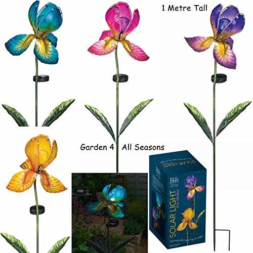 Set von vier–Lila, Fuchsia, Gelb und Blau–Creekwood (Regal Art & Geschenk) Solar Licht Gartenstecker in Geschenkverpackung–Iris Blume