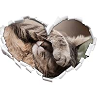 Shy carino a forma di cuore gatto in l'adesivo formato aspetto, parete o una porta 3D: 92x64.5cm, autoadesivi della parete, decalcomanie della parete, Wanddekoratio - Camera Shy