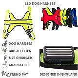 My Trend Pet LED-Hundegeschirr, Rot, Grün, Gelb oder Orange, Blinklicht oder konstantes LED-Licht, hält Ihren Hund sicher und gut sichtbar. Einfach den Hund anstecken und losgehen.