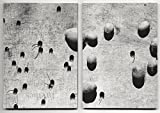 Fireflies #2: Abbas Kiarostami / B?la Tarr: Words and art inspired by film