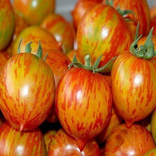 """Ungarische Samen Tomate""""Weinberg rot"""" fruchtiges Aroma, von unserer ungarischen Farm samenfest, nur organische Dünger, KEINE Pesztizide, BIO hu-öko-01"""
