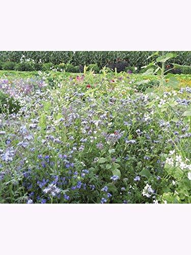 Kiepenkerl Bienenfutterpflanzen, einjährig - 1kg