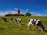 Artland Qualitätsbilder I Wandtattoo Wandsticker Wandaufkleber 60 x 45 cm Tiere Haustiere Kuh Foto Grün D1OS der Leuchtturm von Bastorf