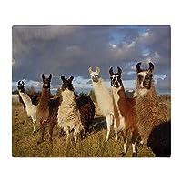 YISUMEI - Soft Fleece Blanket - Llama, 125 x 150 cm Throw Suitable for Sofa or Bed