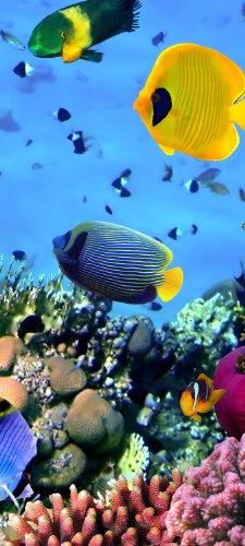 Carta da parati per porta pesci nella barriera corallina tt36890x 200cm carta da parati sott' acqua pesci immersioni