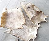 Große Auswahl an Ziegenfell Ghana Afrika Ziegen Fell Rasiert Djembe Drum Bongo (60cm x 50cm)