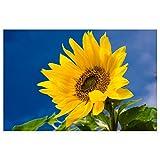 Topposter Blumen Poster - Sonnenblume mit blauem Himmel (Poster in Gr. 40x60cm)