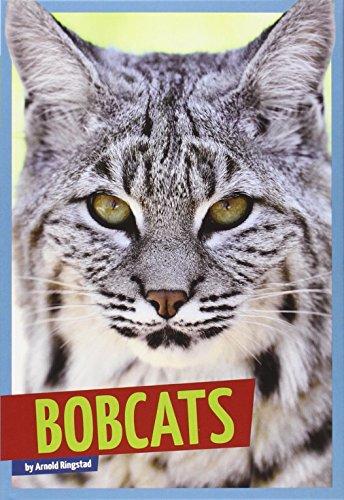 bobcats-wild-cats