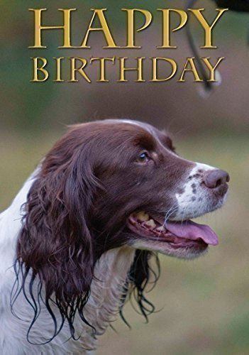 springer-spaniel-dog-birthday-card-perfect-for-people-who-like-springers-shooting-and-field-sports-b