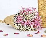 TooGet Bouquet de Fleurs séchées Naturelles gypsophiles pour bébé Bouquet de Fleurs séchées Idéal pour Bricolage Artisanal Décoration de la Maison, Mariage, Magasin White+Pink