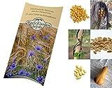 Saatgut Set: 'Die 3 Schwestern': Mais, Bohnen und Kürbis für ein traditionelles Milpa-Beet als Samen in schöner Geschenk-Verpackung