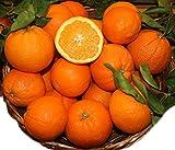 Produkt-Bild: Natur Orangen 5 Kg