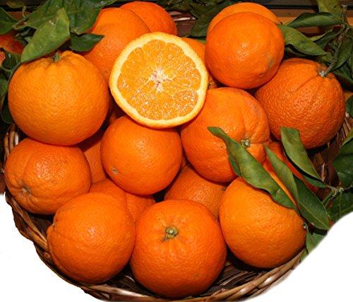 Natur Orangen 5 Kg