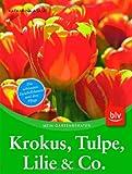 Krokus, Tulpe, Lilie & Co.: Die schönsten Zwiebelblumen und ihre Pflege
