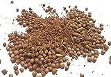 Garam Masala mit Samen Gewürz von SPICESontheWEB 50g