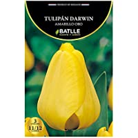 Bulbos - Tulipán Darwin amarillo oro - Batlle