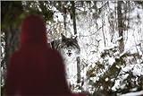 Posterlounge Leinwandbild 180 x 120 cm: Rotkäppchen blickt Zum Wolf von Richard Wear/Design Pics - fertiges Wandbild, Bild auf Keilrahmen, Fertigbild auf Echter Leinwand, Leinwanddruck