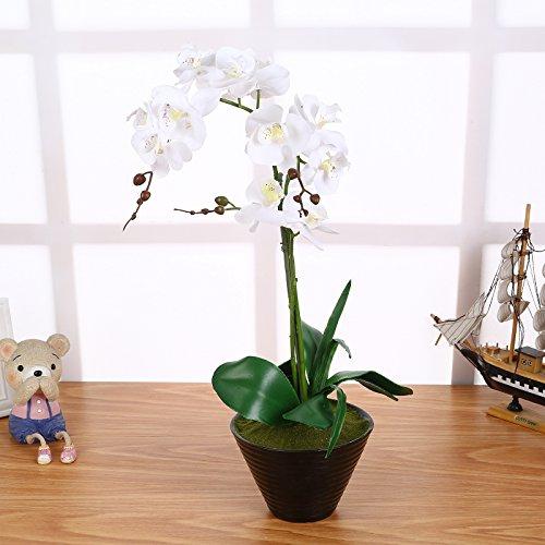 Künstliche Orchideen im Topf Weiß mit 3 Rispen 55cm Groß I ECHT WIRKEND I Phalaenopsis Orchidee Kunstblume I Orchidaceae